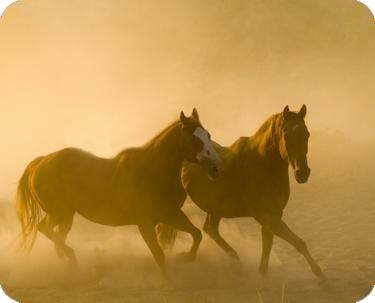 mustang_horse2